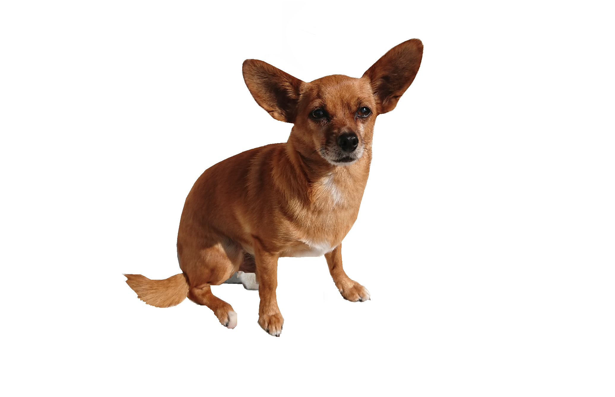 Hunde, Hundezubehör, Hundeshop, Petshop