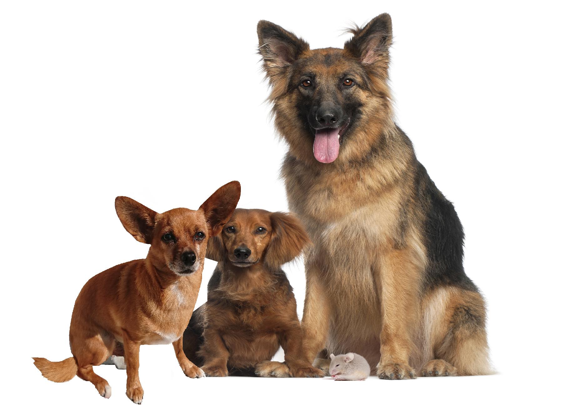 Halsband, Hundehalsband, Hunde Zubehör, Pet-Shop, Tierhandlung, Zubehör für Haustiere, Zoohandlung, Hundeweste, halsband für hund, led halsband, Leut Halsband, Hundenapf, Fressnapf, Katzenbaum, Hundegeschier, Hundefutter, Tier Equipment, Hunde Spielzeug, Fressnapf, Haustiere, Zubehör für Haustiere, Tierwelt, Animalia, Lederhalsband, Halsband, Haustierzubehör, Haustierspielzeug, Halsband gravieren, Halsband mit Gravur