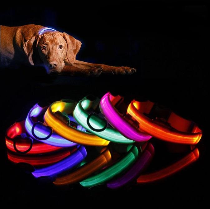LED Hunde Halsband, Haustier-Shop Schweiz