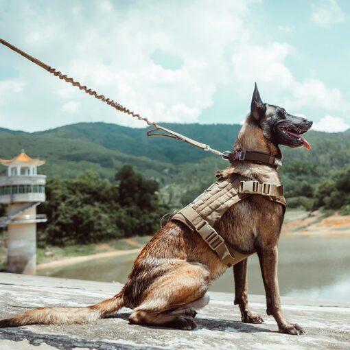 Taktisches Hundehalsband Nylon