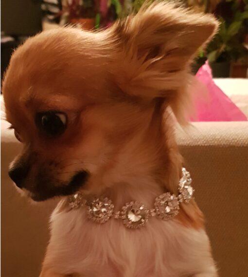 Hunde Schmuck Hunde-Halsband