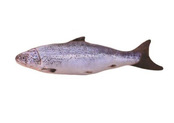 Spielzeug für Haustiere, Plüsch-Fisch für Haustiere, Fisch-Plüschtiere Fischer zubehör, Fliegenfischen