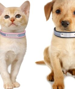 Halsband für Haustiere mit Name eingravieren