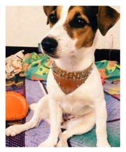 Lederhalsband mit Nieten, Halsband mit Nieten für Hunde, Nietenhalsband für Hunde