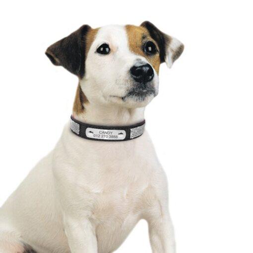 Hunde-Halsband mit Gravur, Schmuck Ketten für Hunde Hundeschmuck, Hundehalsband mit Diamanten, Beverly Hills Chihuaua Halsband