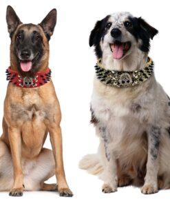 Halsband mit Nieten, Nietenhalsband für Hunde
