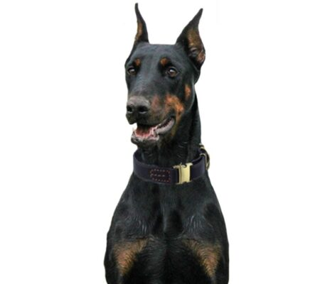 Hundehalsband Leder, Lederhalsband für Hund, Echt-Lederhalsband