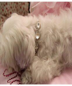 Hunde-Sicherheitsgurt Auto, Fellpflege-Handschuh, Halsband mit Schriftzug, Halsband, Hundehalsband, Hunde Zubehör, Pet-Shop, Tierhandlung, Zubehör für Haustiere, Zoohandlung, Hundeweste, halsband für hund, led halsband, Leut Halsband, Hundenapf, Fressnapf, Katzenbaum, Hundegeschier, Hundefutter, Tier Equipment, Hunde Spielzeug, Fressnapf, Haustiere, Zubehör für Haustiere, Tierwelt, Animalia, Lederhalsband, Halsband, Haustierzubehör, Haustierspielzeug, Halsband gravieren, Halsband mit Gravur, Hundeschmuck,