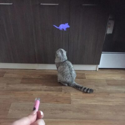 Katzen-Laser Maus