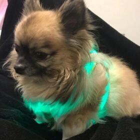 LED-Hundeweste, LED-Hundegeschirr, Hundeweste mit LED, Hundegeschirr mit LED----