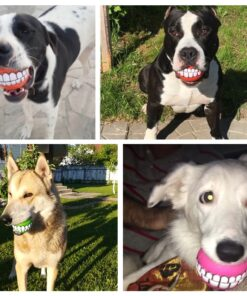 Hundespielzeug, Spielzeug für Hunde, Tiershop, HundeBall Smile