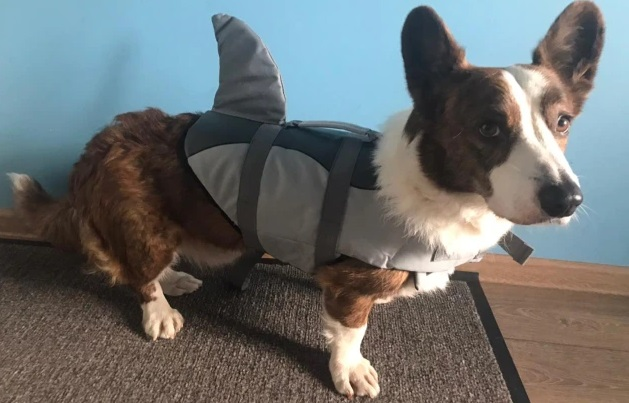 Hunde Schwimmweste mit Haiflosse