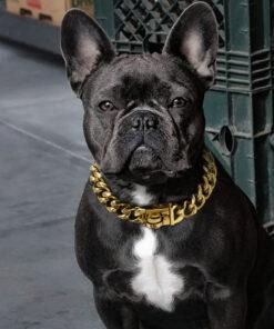 Goldkette Hundehalsband