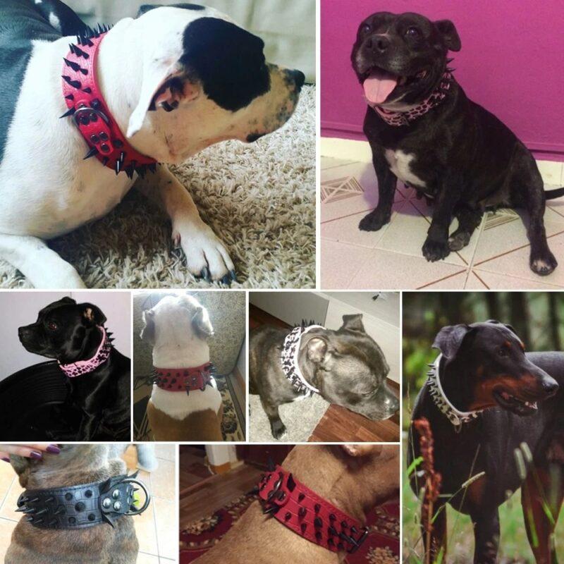 Lederhalsband mit Nieten für Hunde