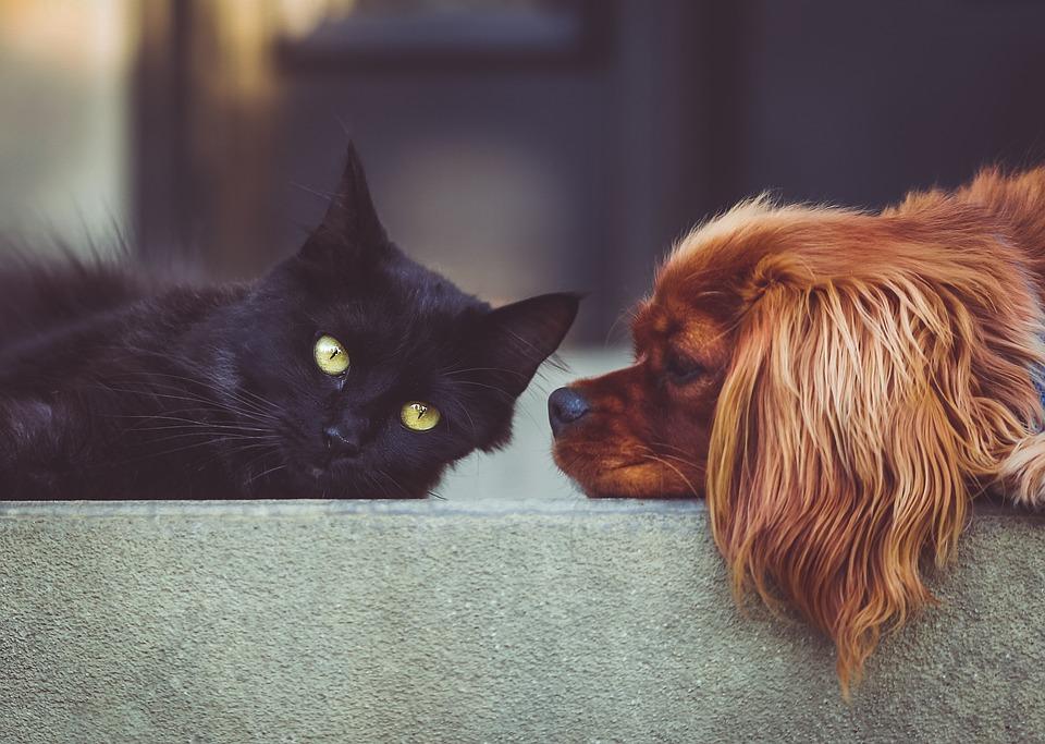 Hundefutter ohne Konservierungsstoffe bestellen, Katzenfutter ohne Konservierungsstoffe bestellen