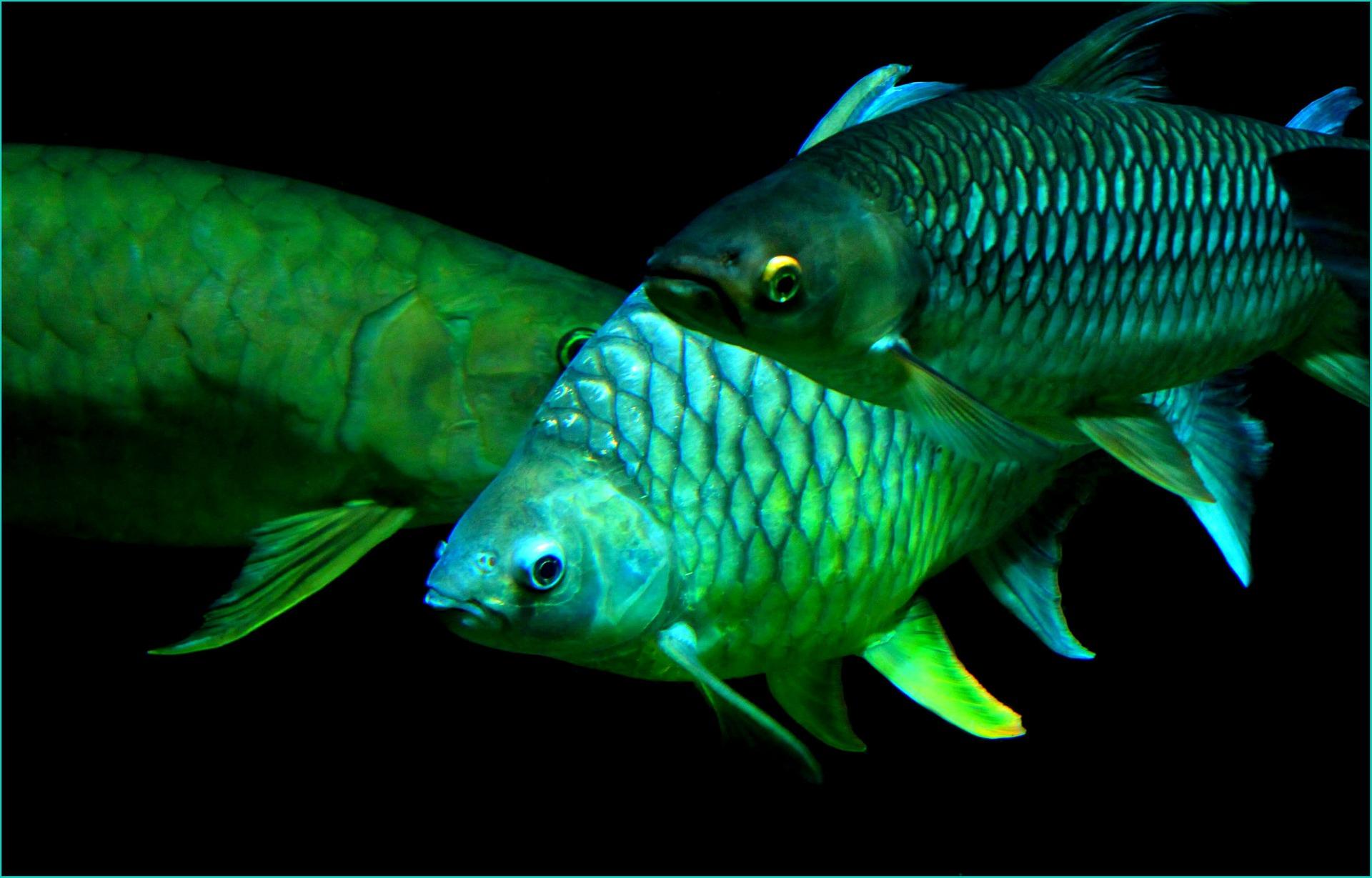 Onlineshop für Aquaristik und Tierbedarf, Halsband gravieren, Hundefutter, Xantara Tierfutter, Aquarium Dekoration, Aquarium