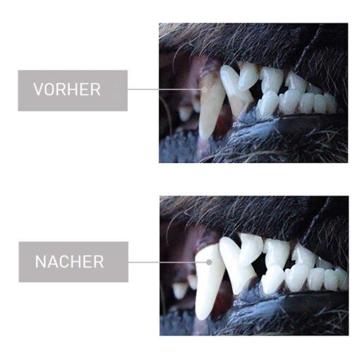 Hunde Zahnreinigung Kauknochen