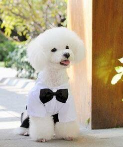 Hundekostüm james dog, Hunde Kostüm Anzug mit Fliege