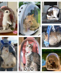 Transportrucksack Katze Transparent